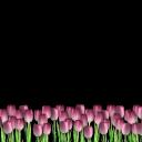 Праздники (48) - 720x576 png