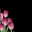 Праздники (49) - 720x576 png