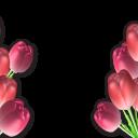 Праздники (50) - 720x576 png