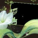 Праздники (42) -1508x1005 png