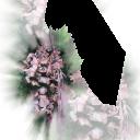 Цветы10 - 1848х2310