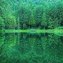 Зеленое отражение...
