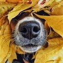 Осень на носу...