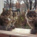 Петербургские котики...
