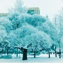 Зимнее очарование...