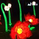 Фестиваль гигантских китайских фонарей 2019, Приморский парк Победы, Санкт-Петербург