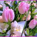 С 8 марта 2013 всех милых женщин!
